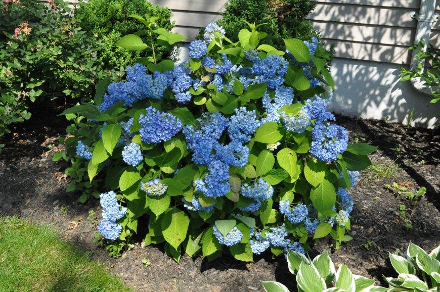 shrubs-024