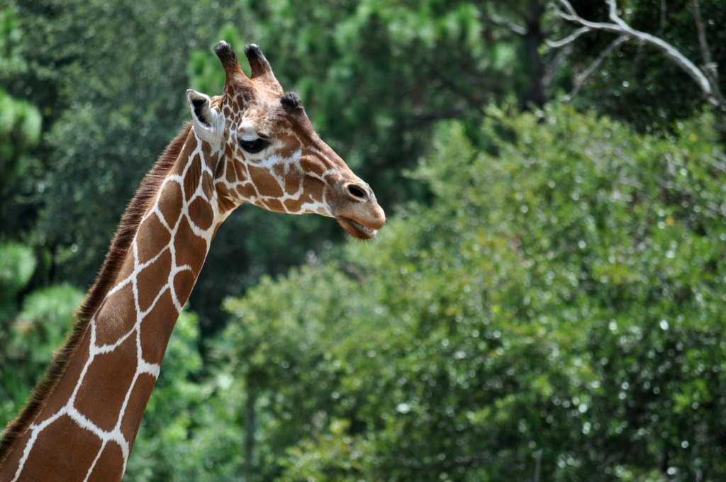 zoo-439